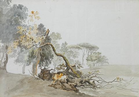 a study of trees by carlo labruzzi