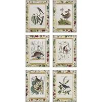 untitled (12 works from recueil de divers oiseaux étrangers et peu communs) by johann michael seligmann
