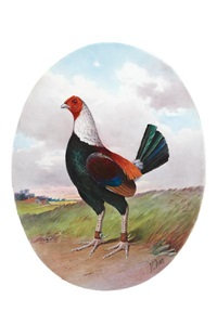 a fighting cock by j.e. dean