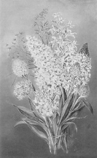 orchideenarten vom hochlantsch in der steiermark by marie kartsch