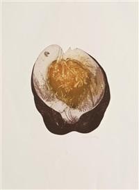 insectario (portfolio of 6) by nunik sauret