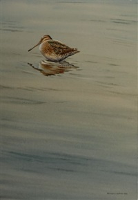 snipe by martin glen loates