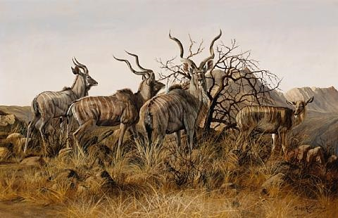 kudus in the brush by gary r swanson