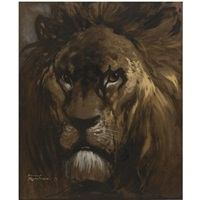 male lion by harry rountree