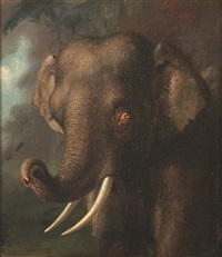 elephant by william huggins