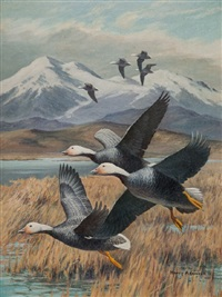 emperor geese by harry curieux adamson