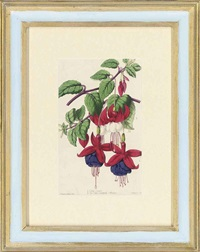 twelve floral studies (12 works) by alfred adlard and james andrews