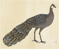 a peacock-pheasant (polyplectron) by anonymous-indian (19)