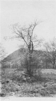 tree study by william j. mullins
