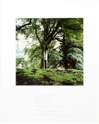 dark, well composted tree (triptych) by andy goldsworthy