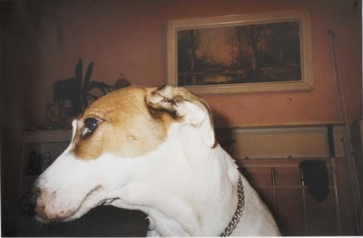 untitled family dog by richard billingham