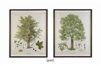 trees (set of 6) by joh kaustsky and g v. beck
