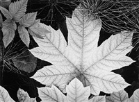 leaf, glacier bay national monument, alaska by ansel adams