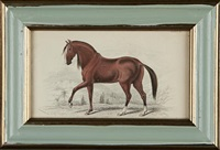 horses (28 works) (from the history of horses) by charles hamilton smith