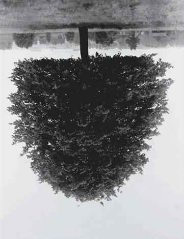 flanders trees - hudelgem by rodney graham