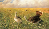great bustards on the great plain by gábor modrovich