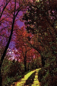 foresta incantata by maria paola tallini