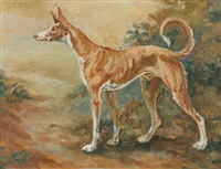 ibizan hound by nan kilgore little
