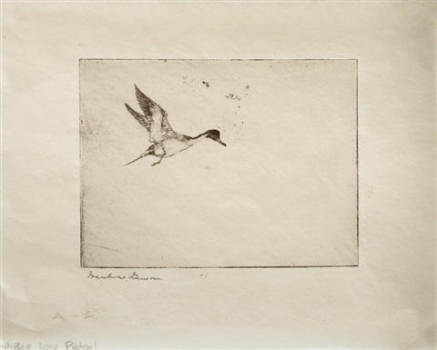 lone pintail 2 works by frank weston benson