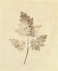 the seminal pencil of nature (13 works) by william henry fox talbot