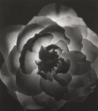 flower study by fred korth