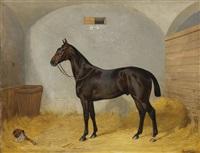 rennpferd bert im stall by emil adam