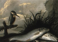 chub and a kingfisher on a riverbank by willem ormea