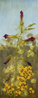 cryptostylis subulata by william ernest maurice fletcher