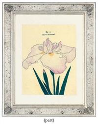 studies of irises by japanese school (19)
