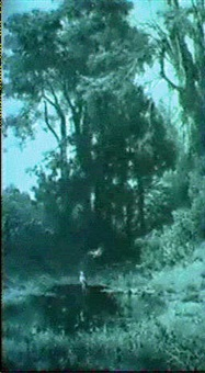 herons beside a woodland pool by fulvia bisi