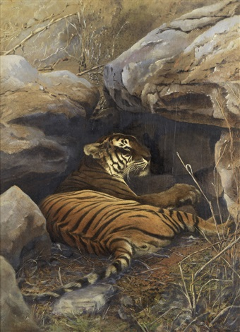 a lying tiger platinum print 2 works by william willoughby hooper