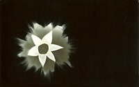 untitled photogram - flower by jose alemany
