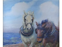 two shire horses, one grey, the other bay by lucy elizabeth kemp-welch