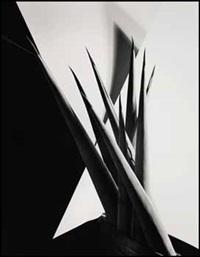 agave design 1 by imogen cunningham