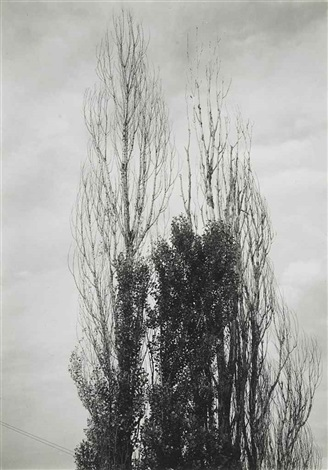 poplars lake george by alfred stieglitz