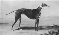 a greyhound in a landscape by samuel alken sr.