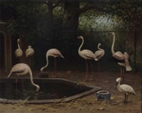 flamingoes in the zoo by marinus adrianus koekkoek the younger
