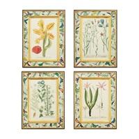 plant studies from phytanthoza iconographia (4 works) by johann wilhelm weinmann
