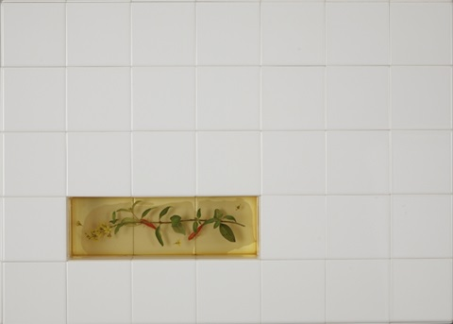 tristellateia australasiae by riusuke fukahori