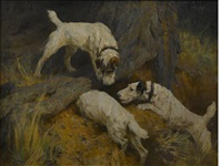 rabbiting by arthur wardle