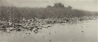 water-lilies from life and landscape on the norfolk broads by peter henry emerson