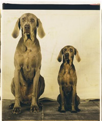 stand in by william wegman