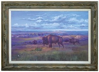 buffalo on the eastern montana plains by ace powell