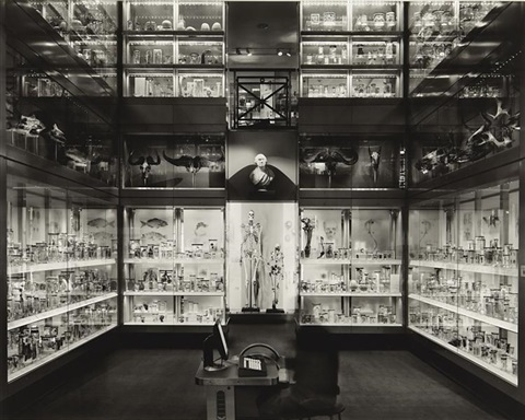 crystal palace hunterian museum london by matthew pillsbury