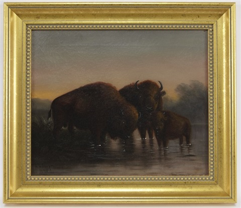 buffalo by astley david middleton cooper
