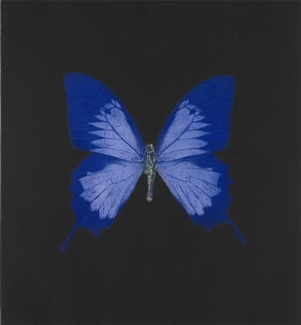 unique blue butterfly by damien hirst