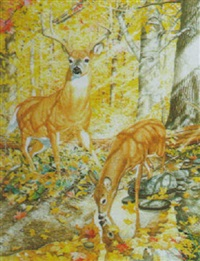 white tailed deer in the forest by martin glen loates