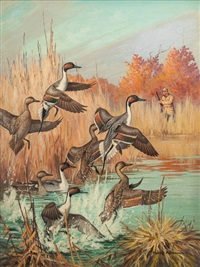 rising ducks by harry curieux adamson
