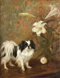 japanese chin on a table by frances c. fairman