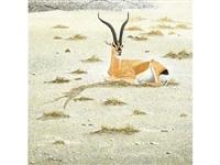 antelope by hans j. peeters